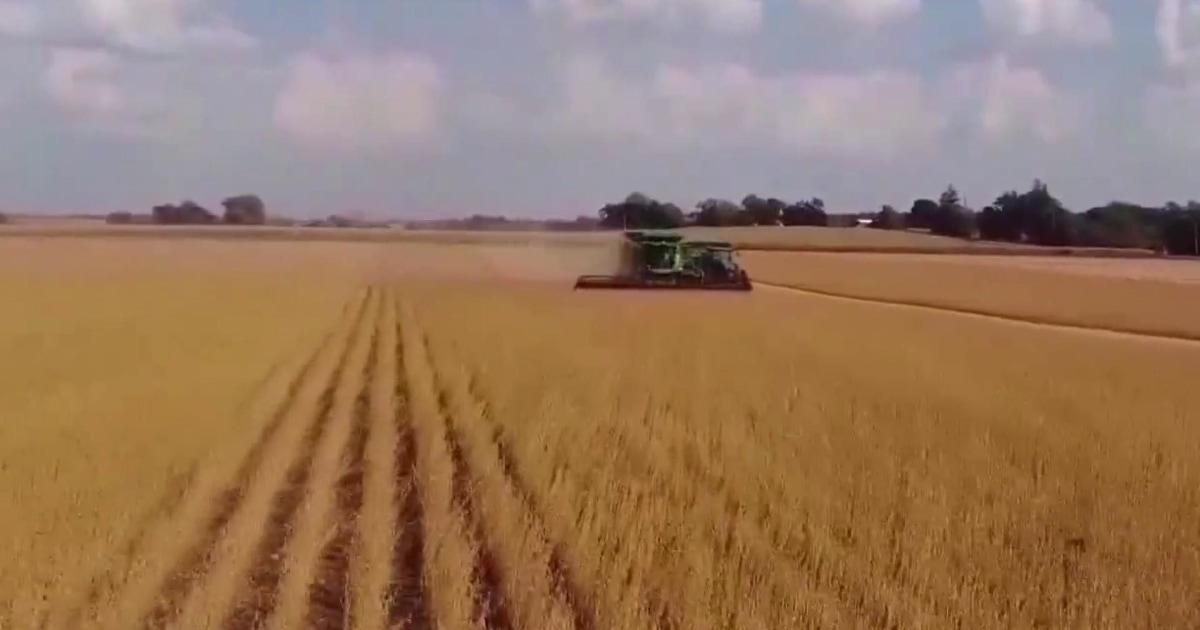 Trump trade war with China hits American farmers