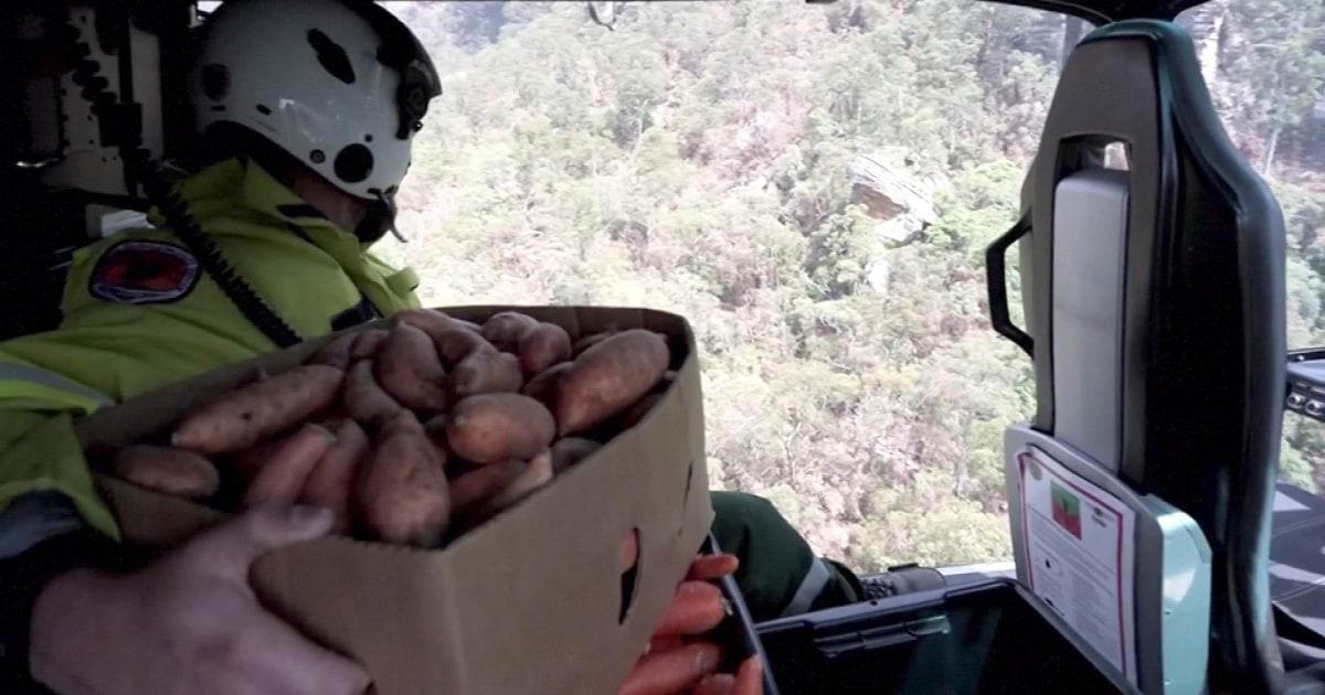 Emergency airdrops von süßen Kartoffeln, Karotten für Wildtiere gefangen von australischen lodert