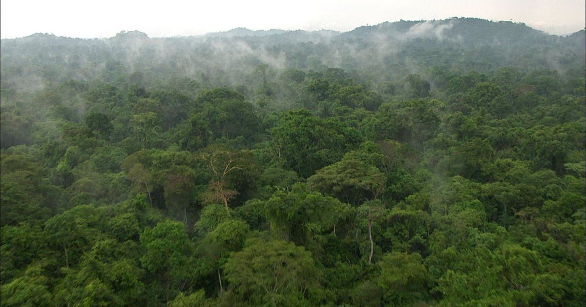 Saving our planet: What's happening in the Amazon? thumbnail