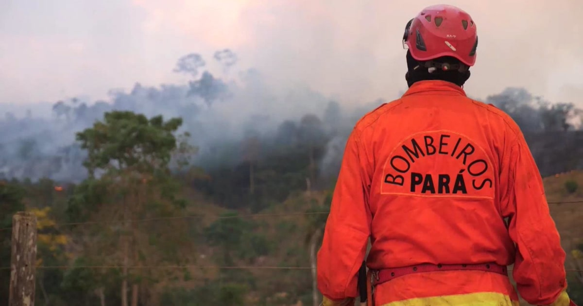 Preventing one amongst the thousands of wildfires ingesting the Amazon rainforest thumbnail