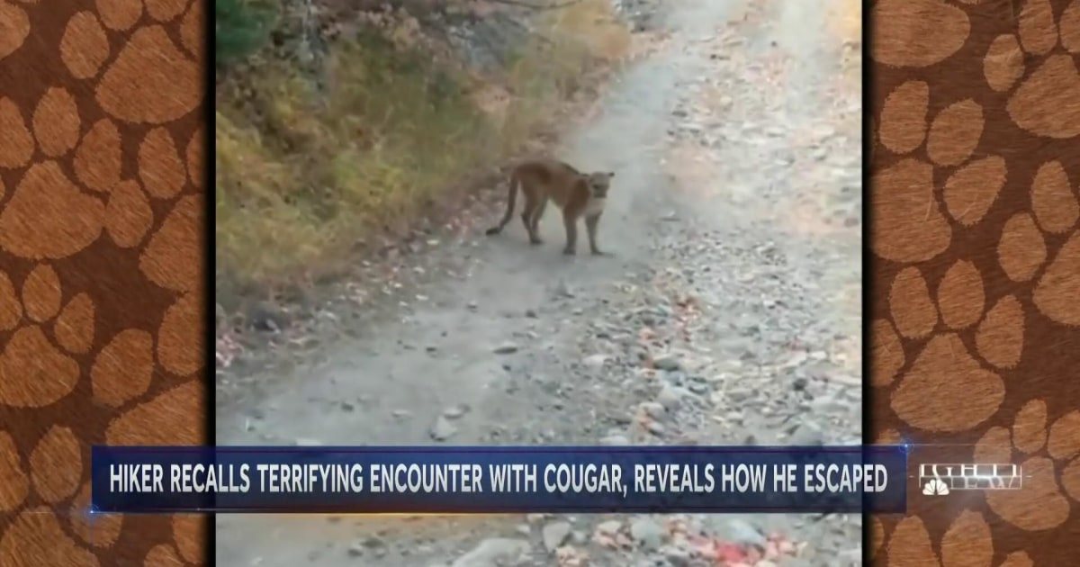 Hiker speaks out after terrifying cougar chase on a Utah mountain