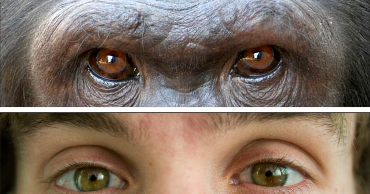 Did Evolution Make Our Eyes Stand Out