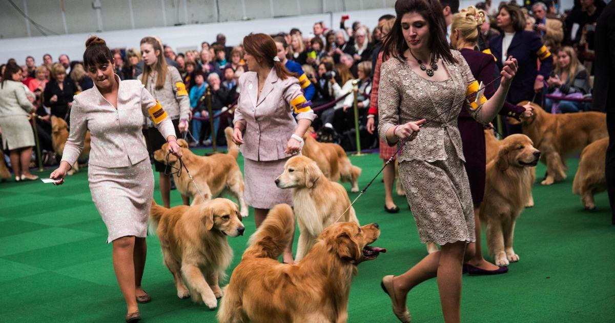 Westminster Dog Show Cnbc
