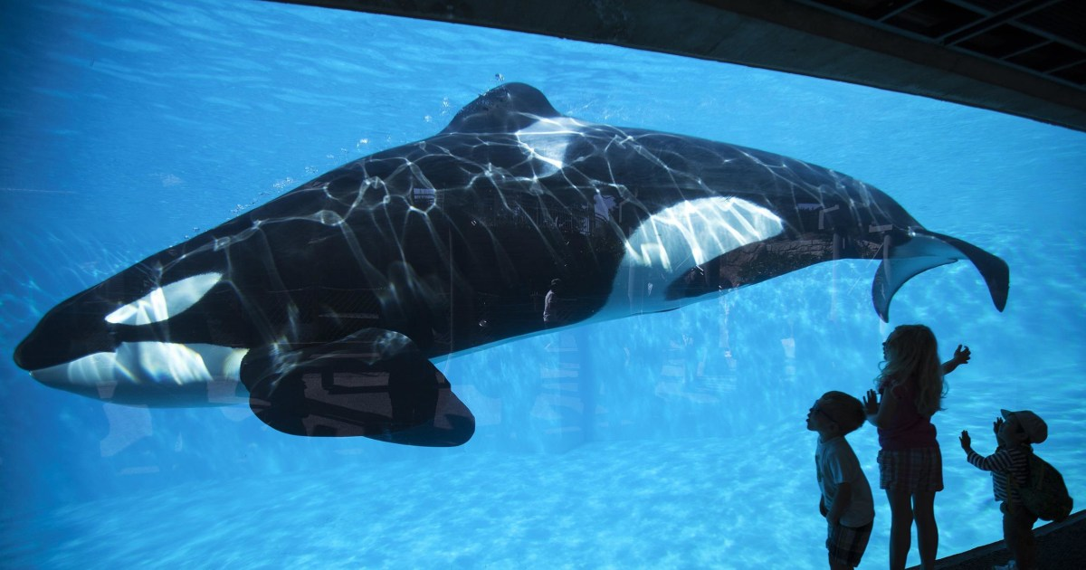 This is a picture of Lucrative Sea World Printable Coupons