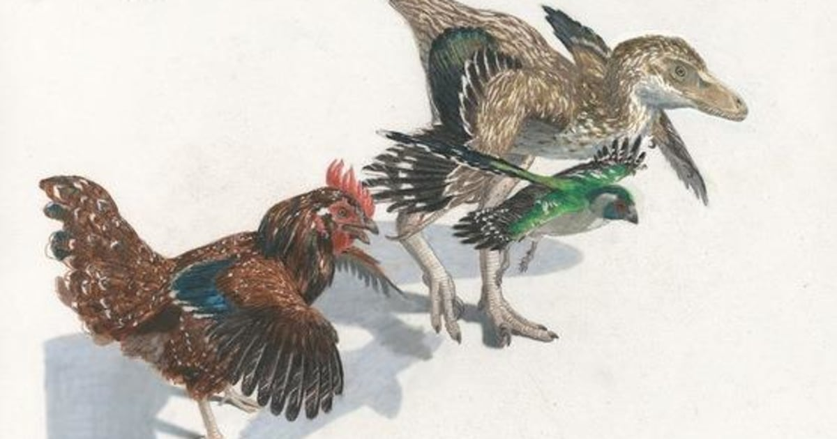 www.nbcnews.com: How Dinosaurs Evolved Into Birds: It Wasn't Quick or Easy