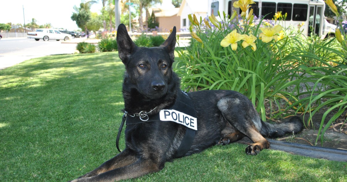 That Dog Won't Hunt: Cops Can't Keep You Waiting for K-9s