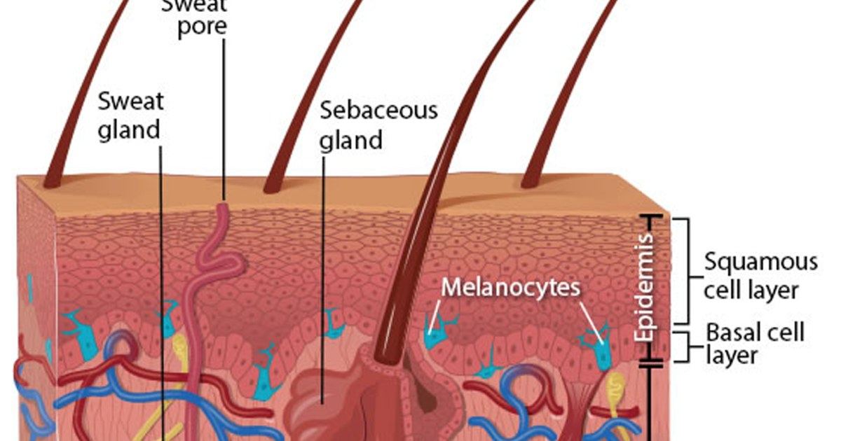 Vitamin Pill Cuts Skin Cancer Risk
