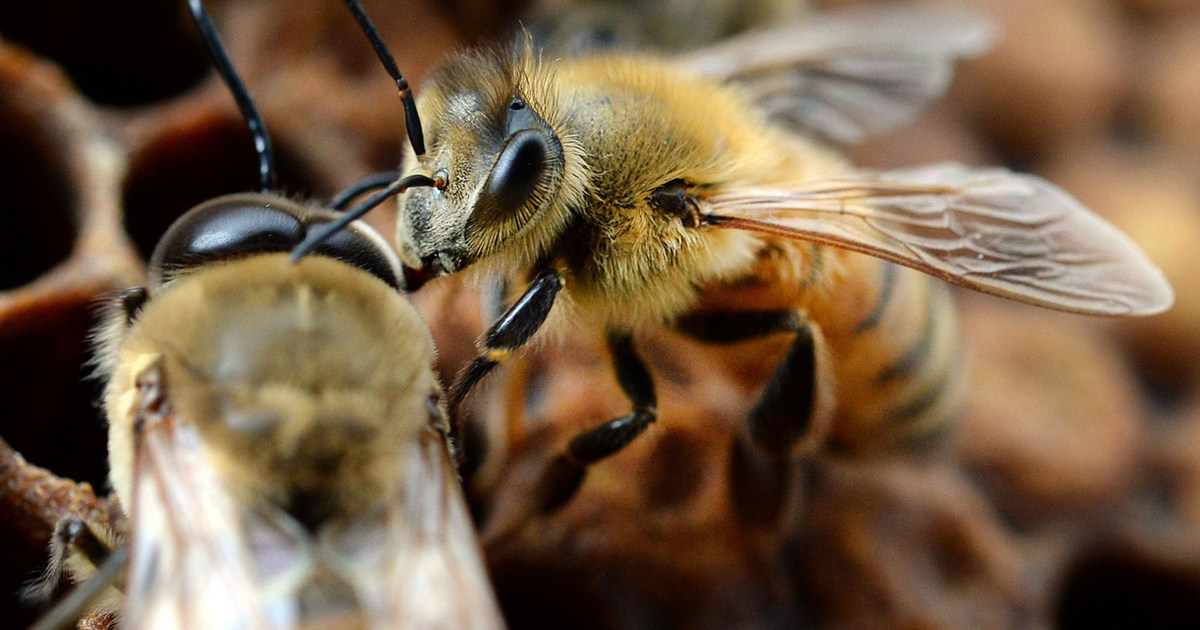 Half a million bees die in Iowa vandalism, two boys charged