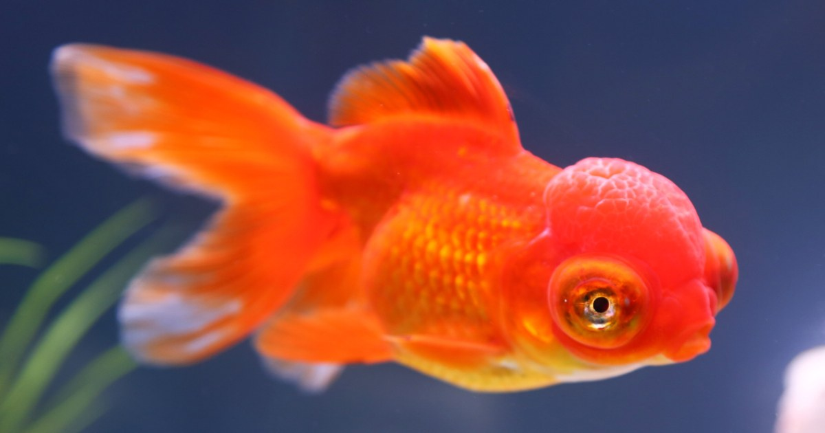 Fish can recognize your face really nbc news for Fish delivery near me
