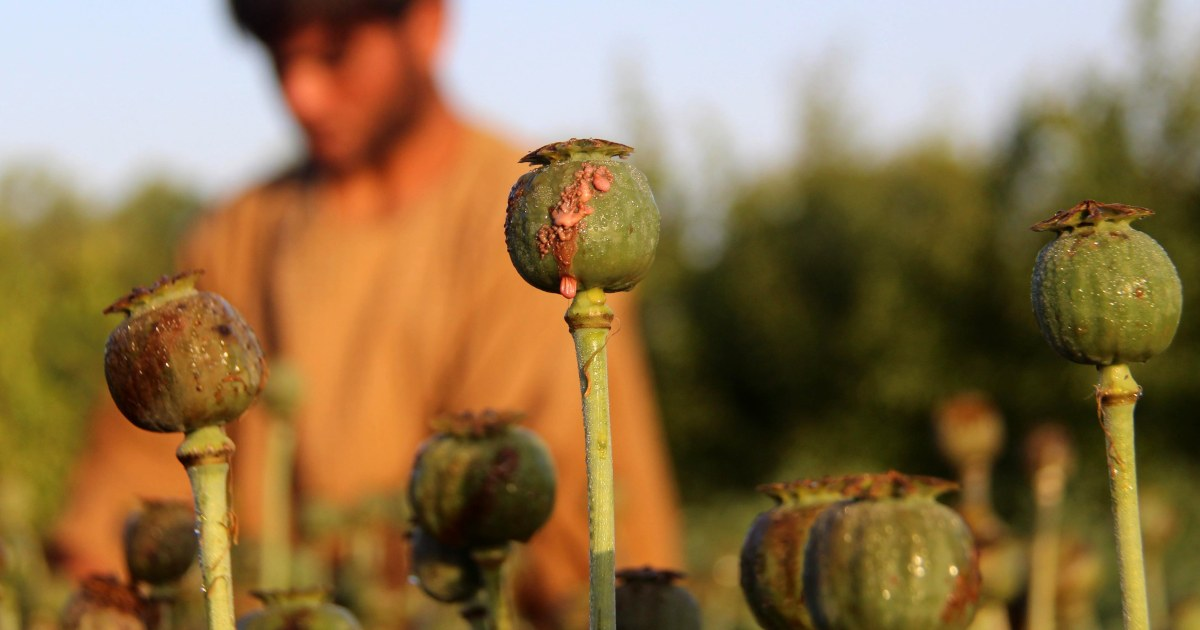 U.S. bombs Afghan opium plants in new strategy to cut Taliban funds