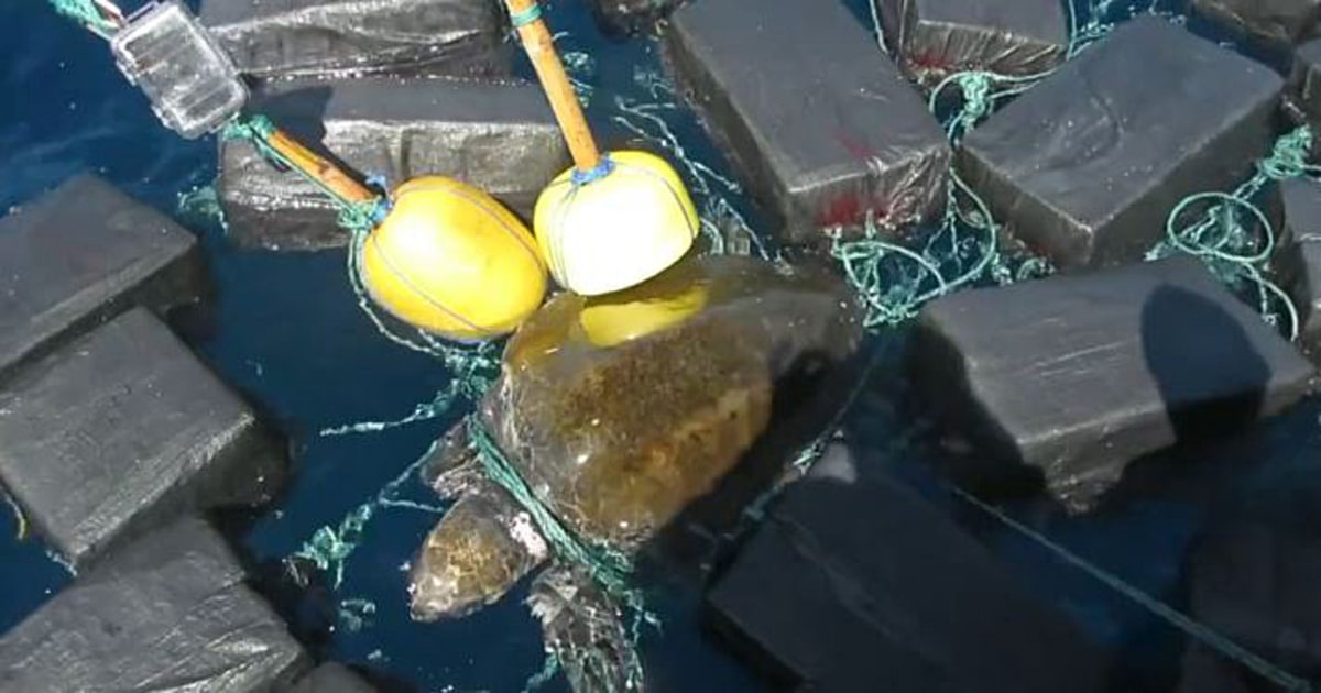 Coast Guard rescues turtle trapped in floating cocaine bales