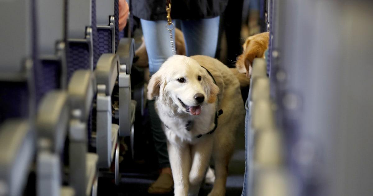 Fake Service Dog On Airplane