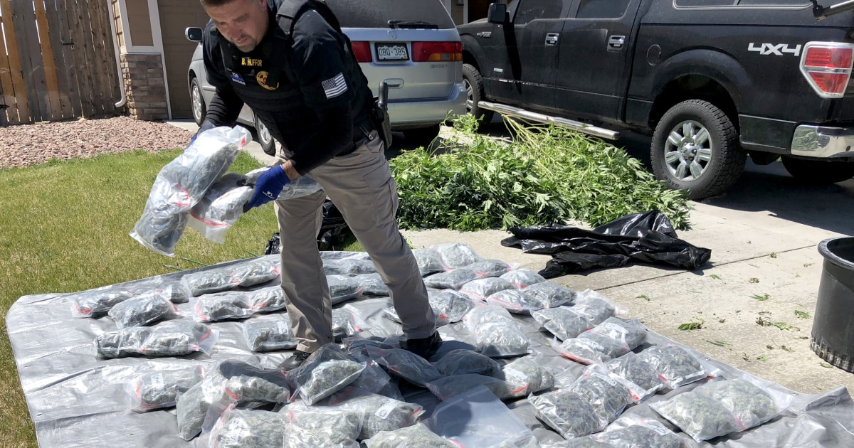 Foreign cartels embrace home-grown marijuana in pot-legal states