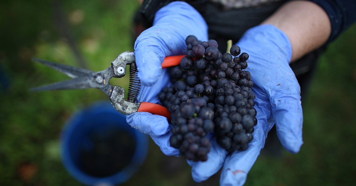 Climate change makes England's vineyards perfect for sparkling wine