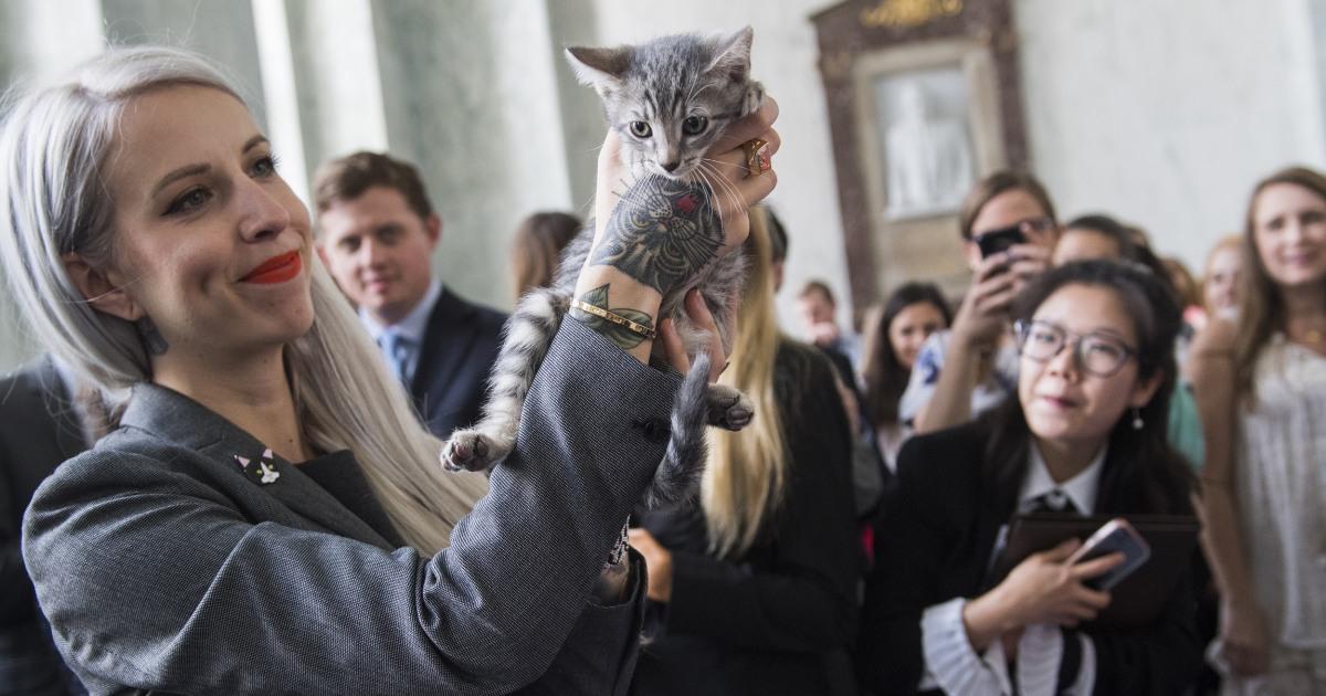 Cat cannibalism: Report discloses 'questionable' gov't