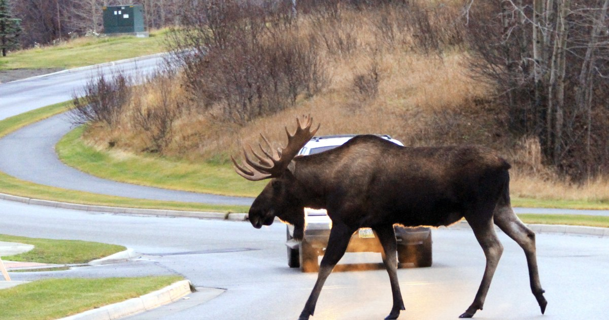 'Meals under wheels': More states make it legal to eat roadkill