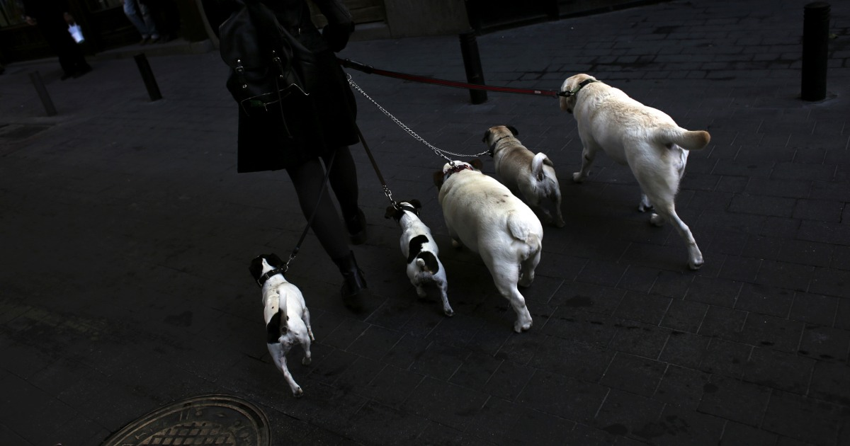 Kena serangan jantung? Memiliki anjing dapat membantu anda hidup lebih lama