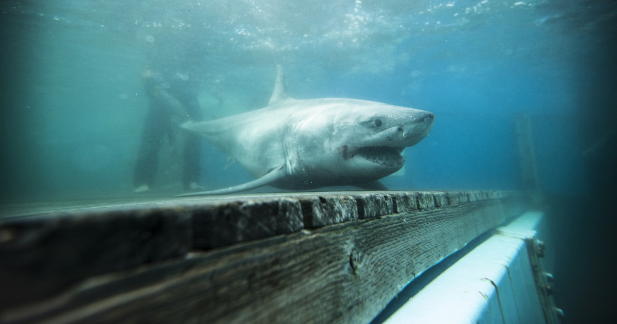 shark week 2020 - photo #14