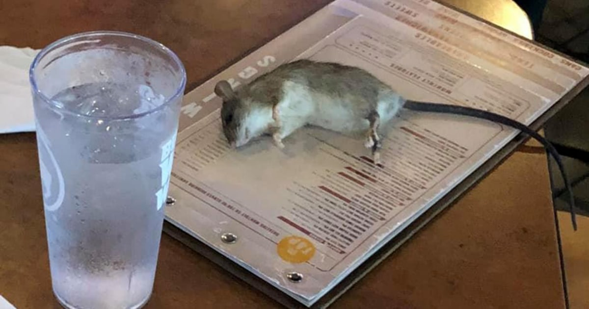 Live rat falls from ceiling and lands on table at Buffalo