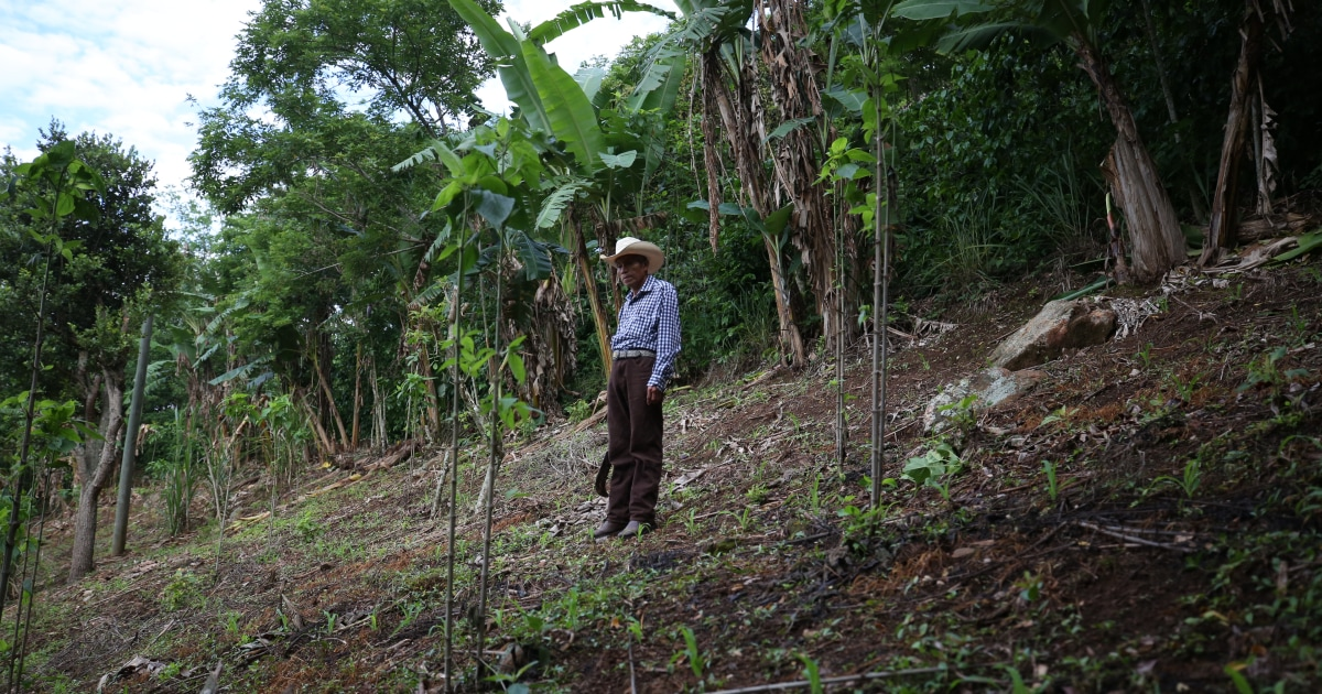 Climate change is devastating Central America, driving migrants to the U.S. border