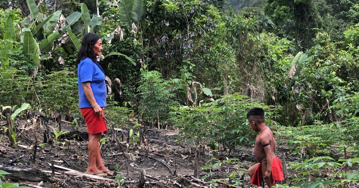 The Amazon's best hope? A female indigenous chief is on a mission to save Brazil's forests