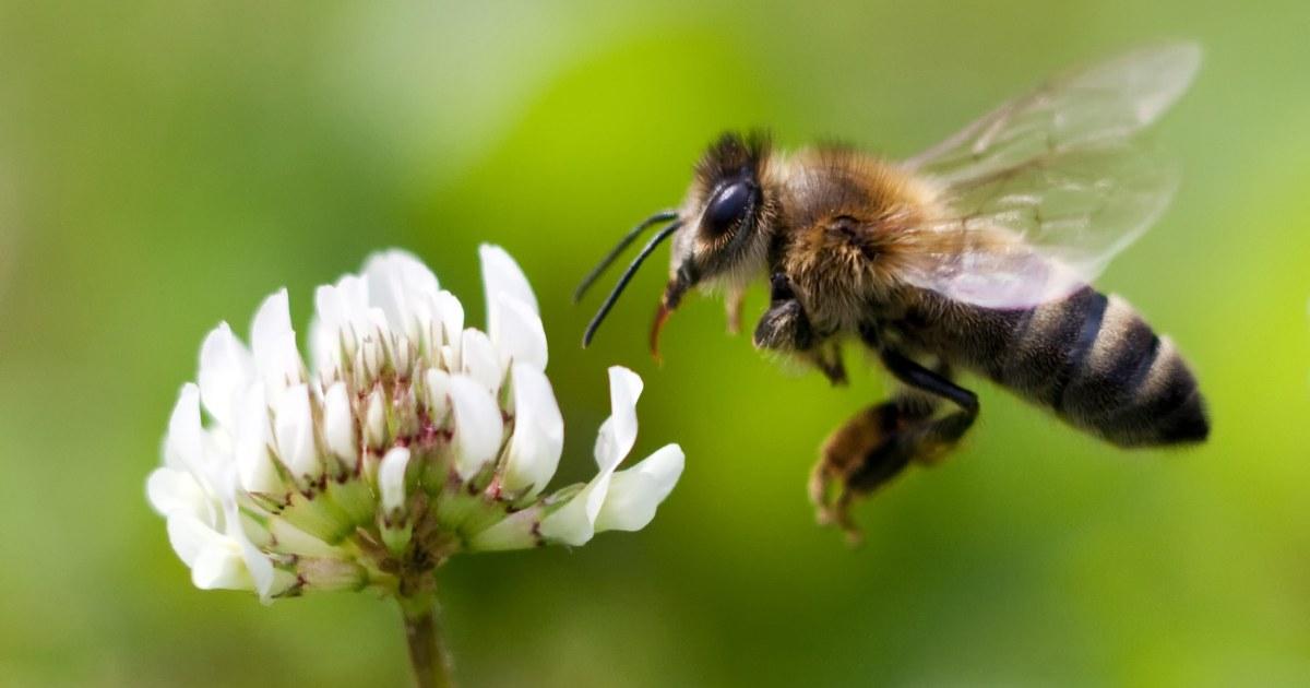 ミツバチを利用して新しい有機農薬がすでに保存しているのか。