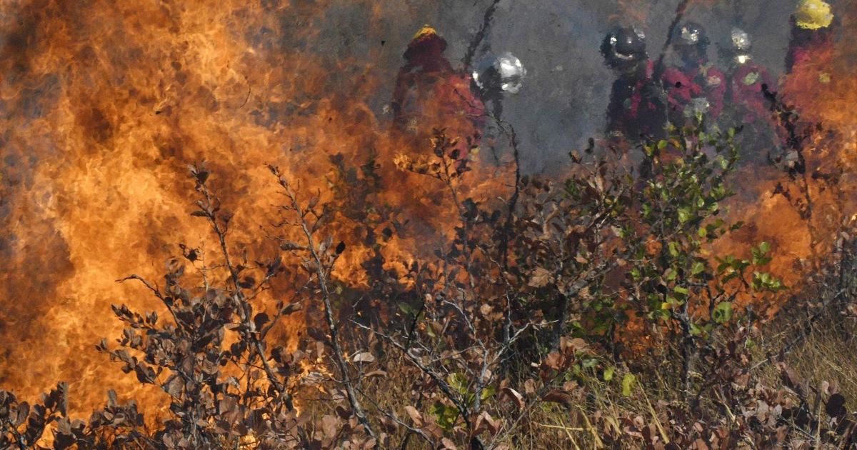 Der Amazonas brennt immer noch. Illegaler Holzeinschlag ist zum Teil selbst Schuld.