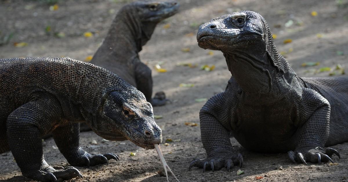 Der Tourismus beschränkt, aber nicht verboten, auf den Indonesischen Komodo-Insel