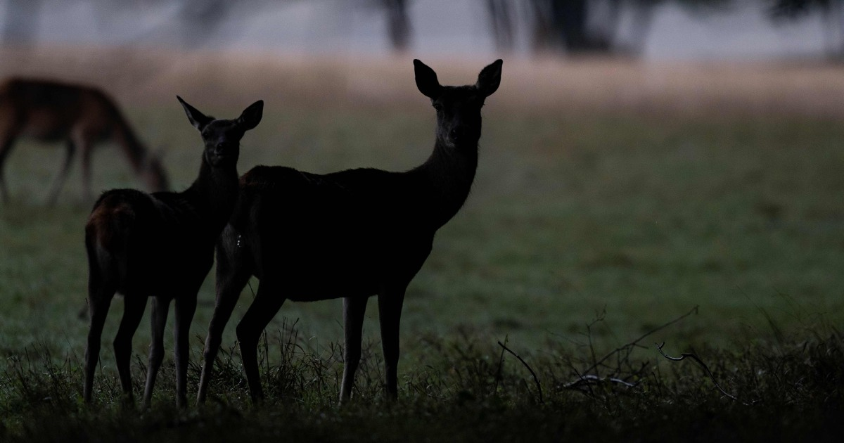 Michigan man accidentally shoots brother after mistaking him for deer