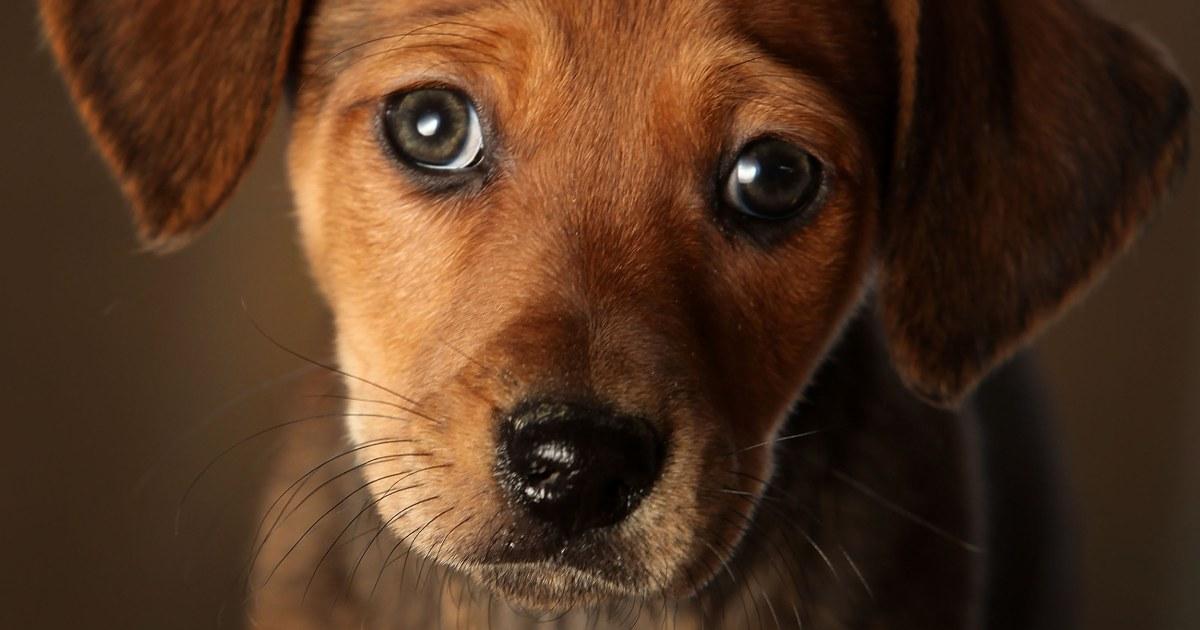 ペットショップで子犬のリンク発生の薬剤耐性細菌13国