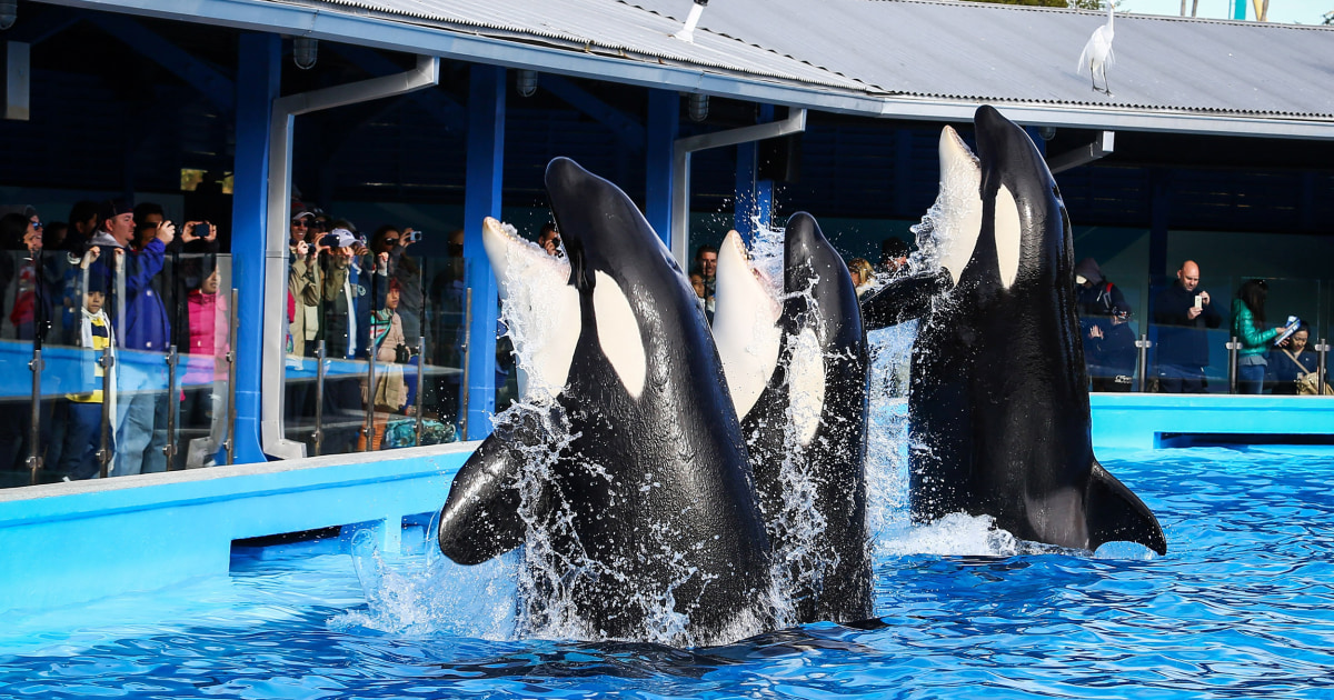 It's just a photo of Punchy Sea World Printable Coupons