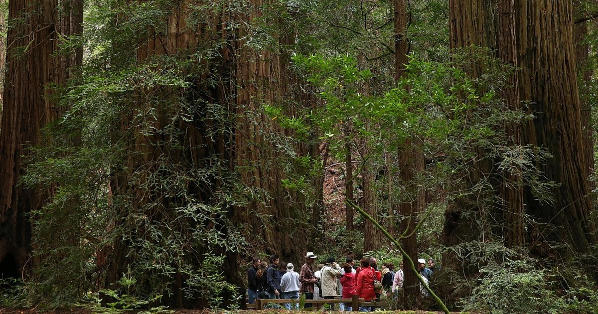 Fallen redwood-Baum tötet Mann beim Wandern in Kalifornien