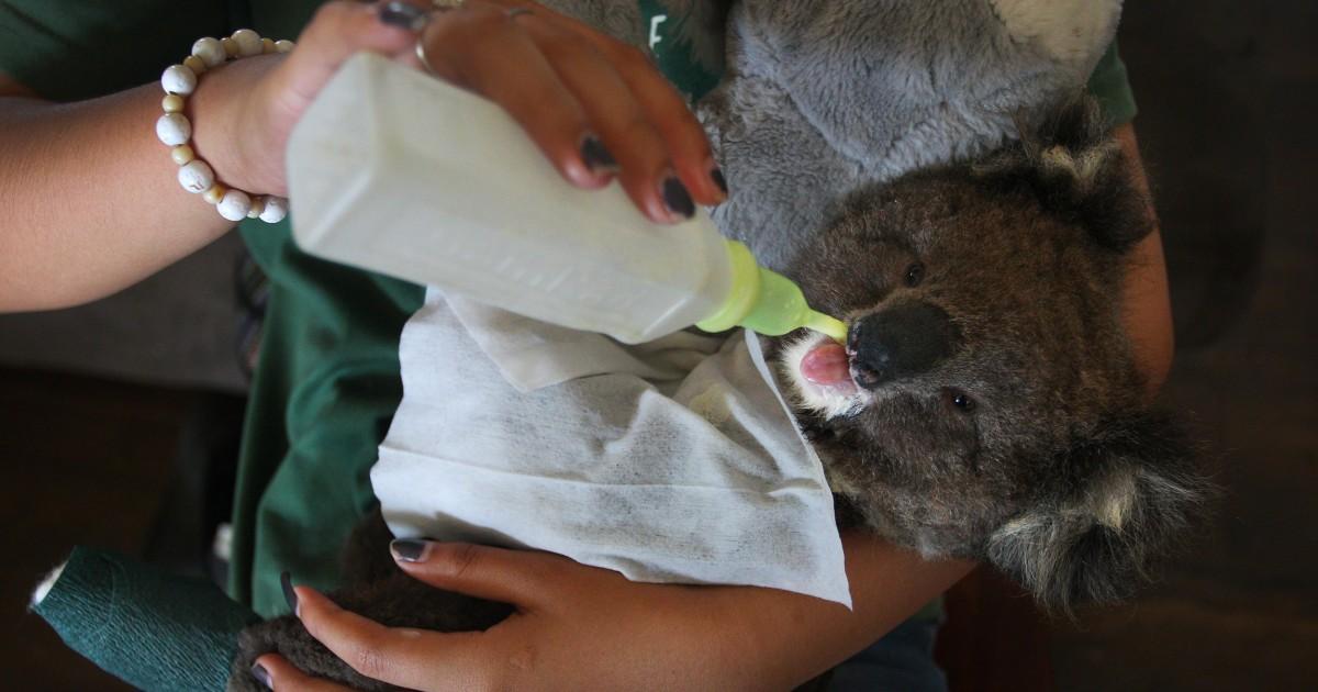 Ilmuwan memperkirakan miliar hewan yang dibunuh oleh kebakaran hutan Australia