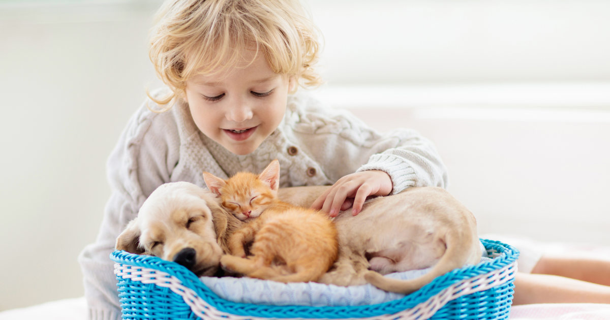Show your pet some love with these top products thumbnail