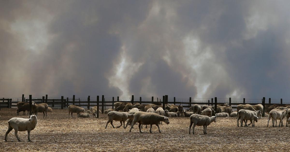 Οι αυστραλοί καλούνται να φύγει, όπως τεράστιες πυρκαγιές αναζωογόνηση