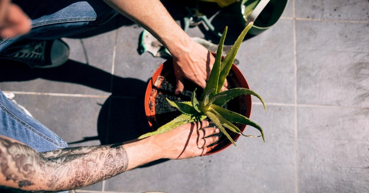 Έχουν ένα μαύρο αντίχειρα; Αυτά τα φυτά απαιτούν το λιγότερο ποσό της φροντίδας