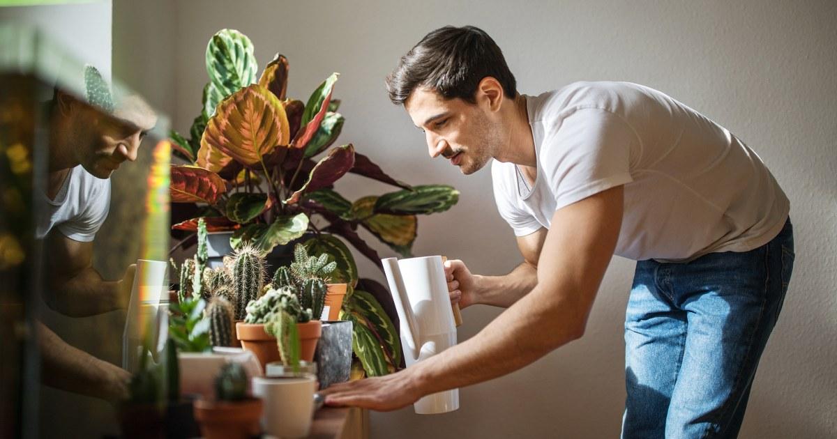 15簡単家の植物にもない金型に関す