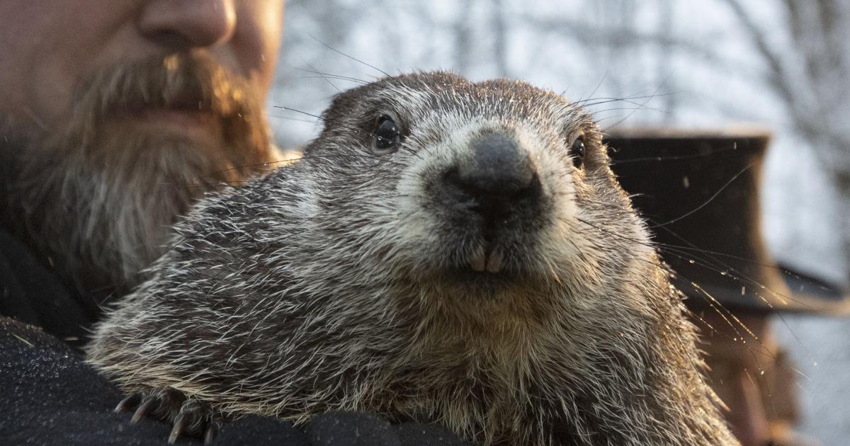 Enam minggu lagi musim dingin? Punxsutawney Phil membuat Groundhog Day prediksi