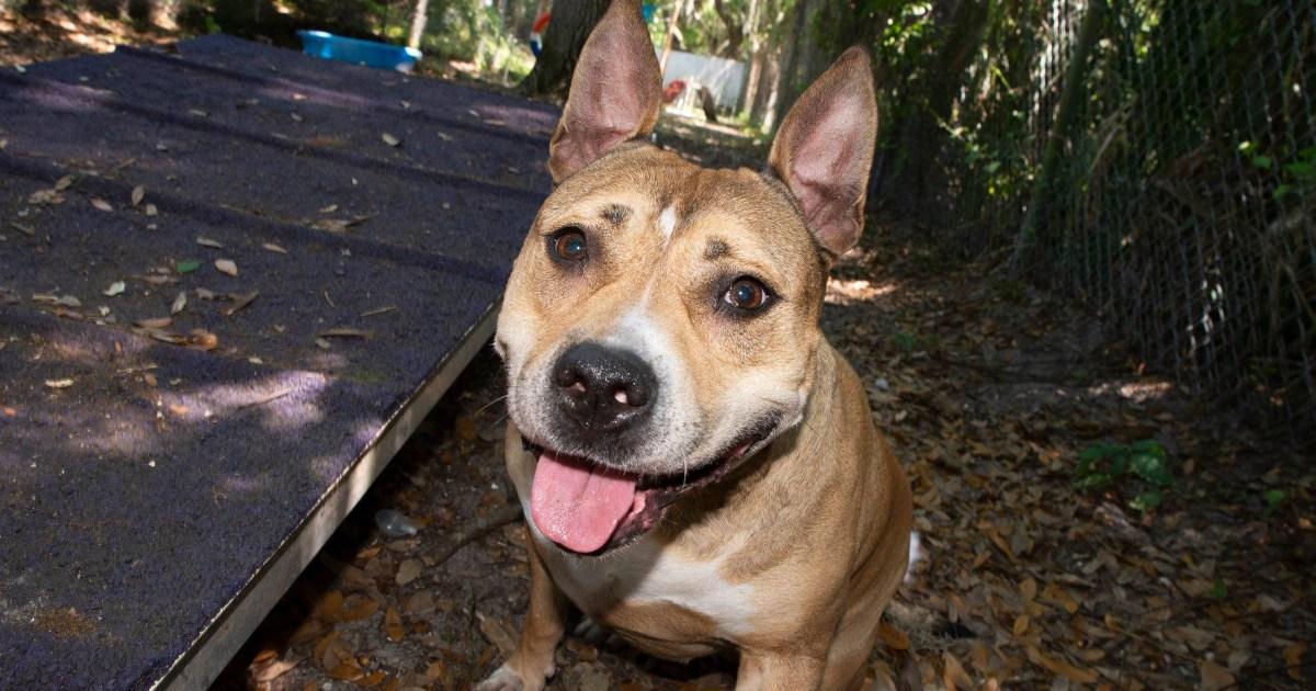 Μπύρα μπορεί να οδηγεί σε Μινεσότα γυναίκα επανένωση με χαμένο σκύλο
