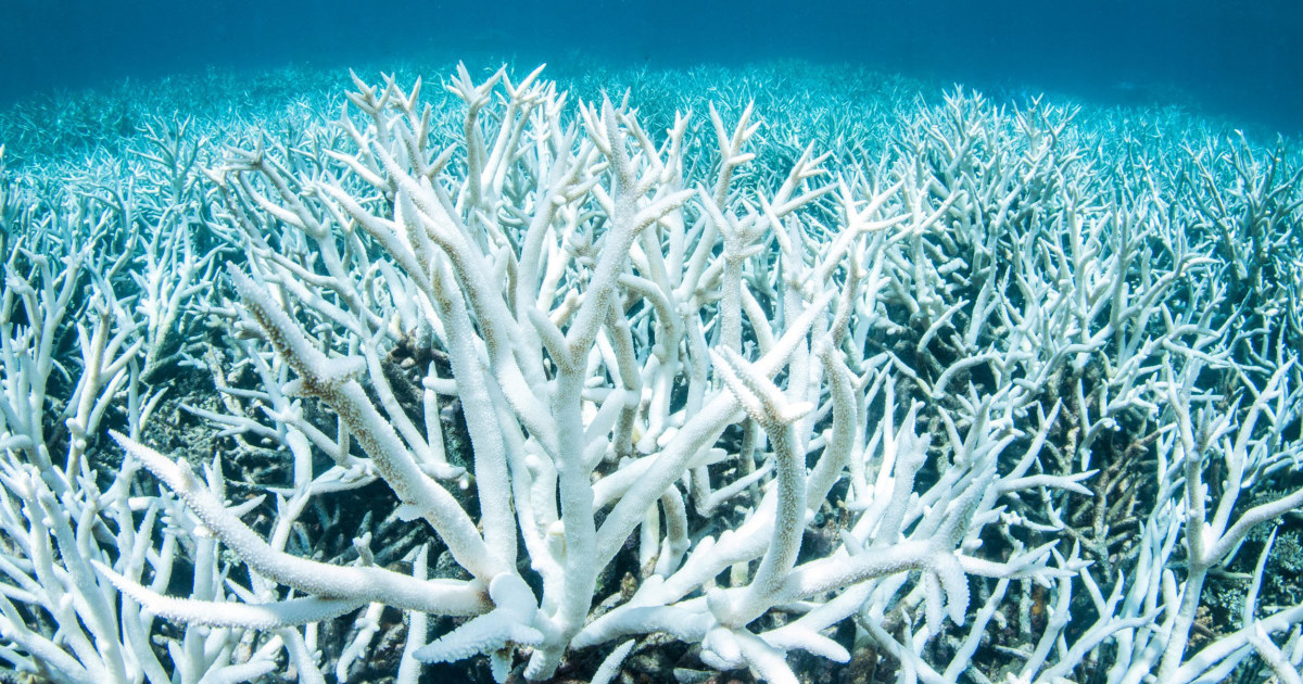 Earth's coral reefs could be gone by 2100, research finds - NBCNews.com