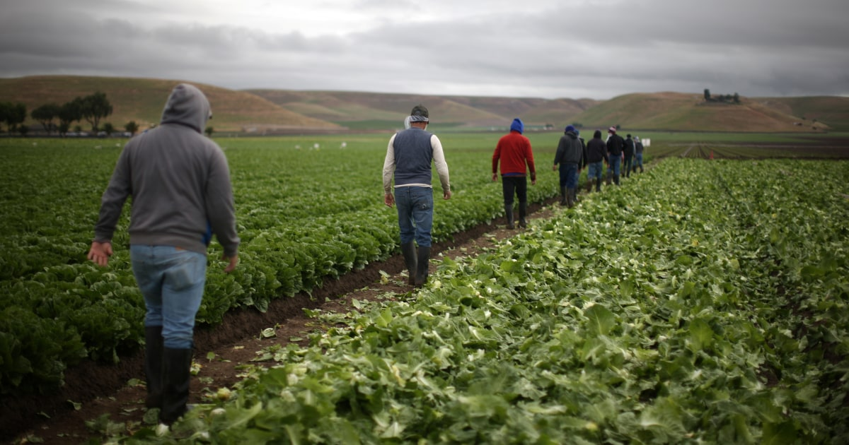 U.S. restricts visas for farmworkers, raising concerns about food supply
