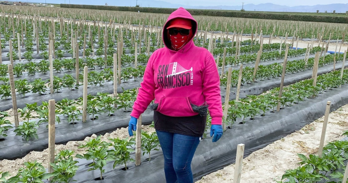 Farmworkers 'harvesting America's food supply' amid coronavirus pandemic fight for safety