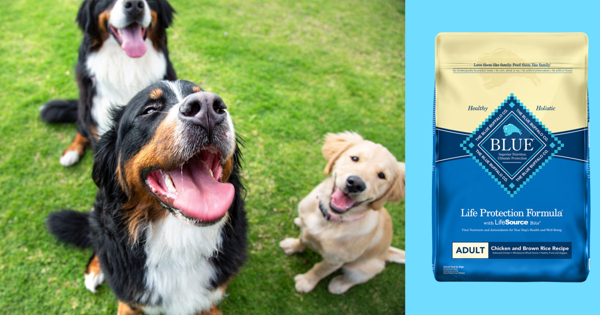 Best dry dog food, according to experts and veterinarians