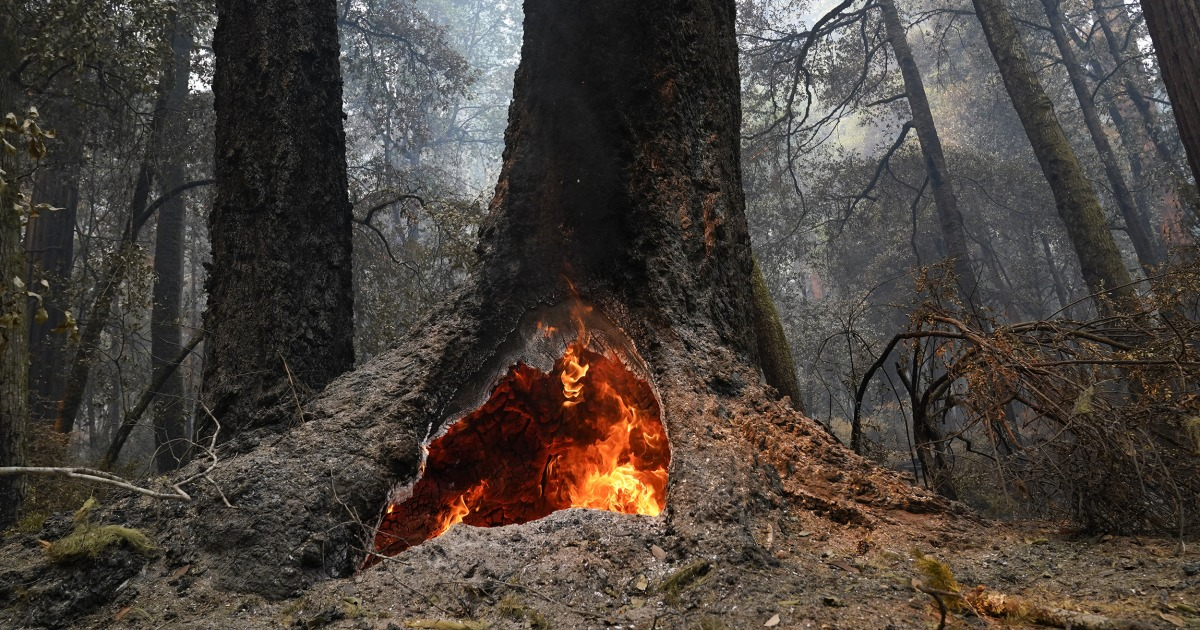 2,000-year-old redwoods survive wildfire at California's oldest state park thumbnail