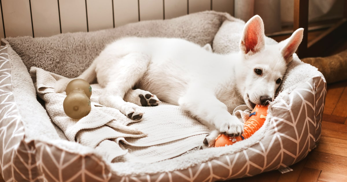 How dog beds might improve quality of life for dogs — and their humans