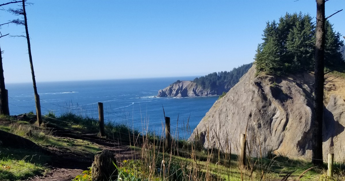 Oregon man falls to his death while posing in tree for photo on oceanside cliff thumbnail