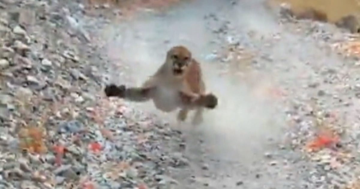 Utah hiker is chased by cougar, video shows: 'I don't feel like dying today'