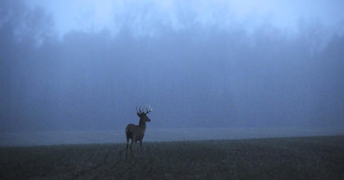 Colorado woman's pet deer gores neighbor, threatens wildlife agent with bloody antlers