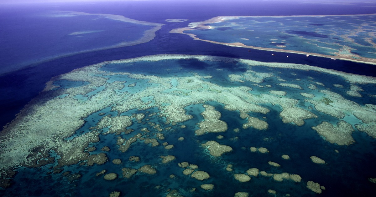 Coral reef taller than the Empire State Building discovered in Australia's Great Barrier Reef – NBC News