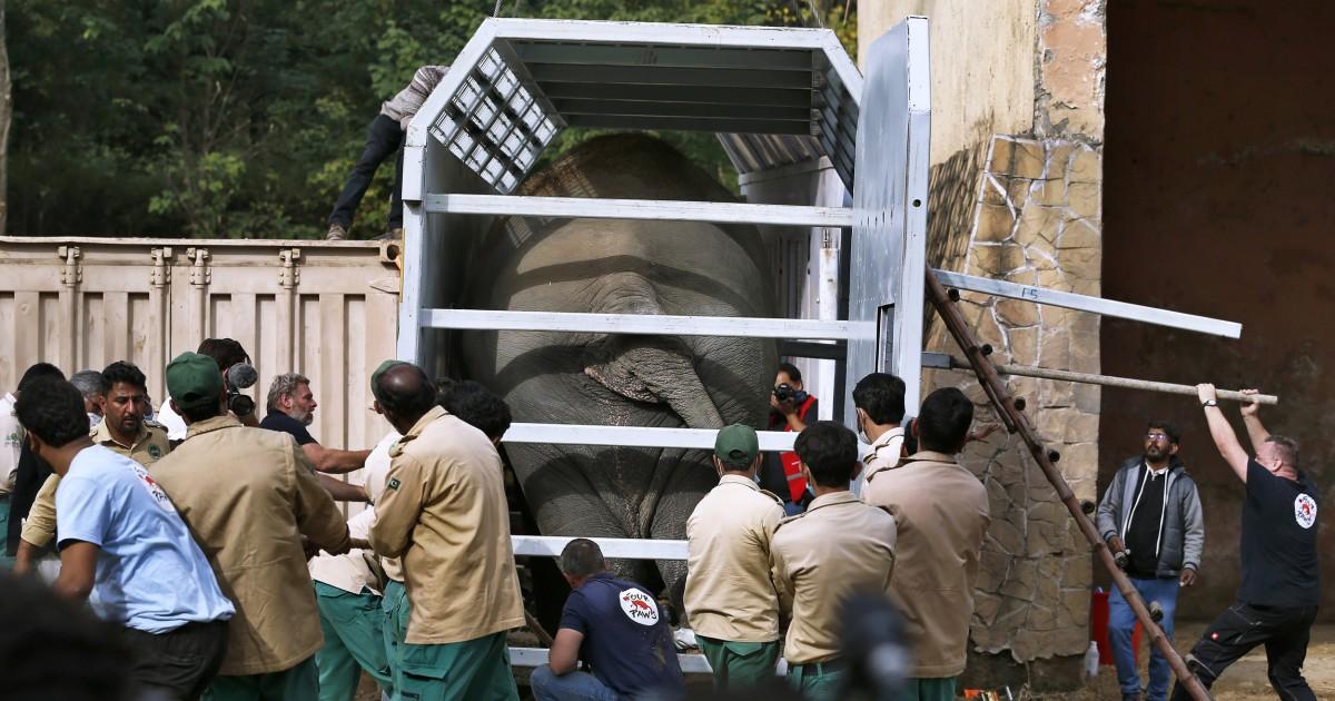 201129 kaavan elephant truck jm 1006 21739771e99bef9b2f079dbc784c84c1 nbcnews fp 1200 630
